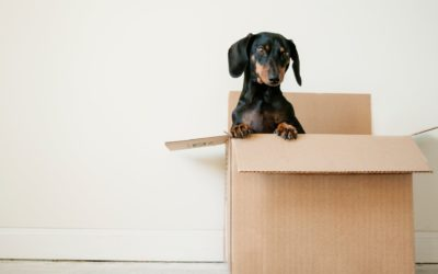 8 Packing Tips – Moving Day Made Simple