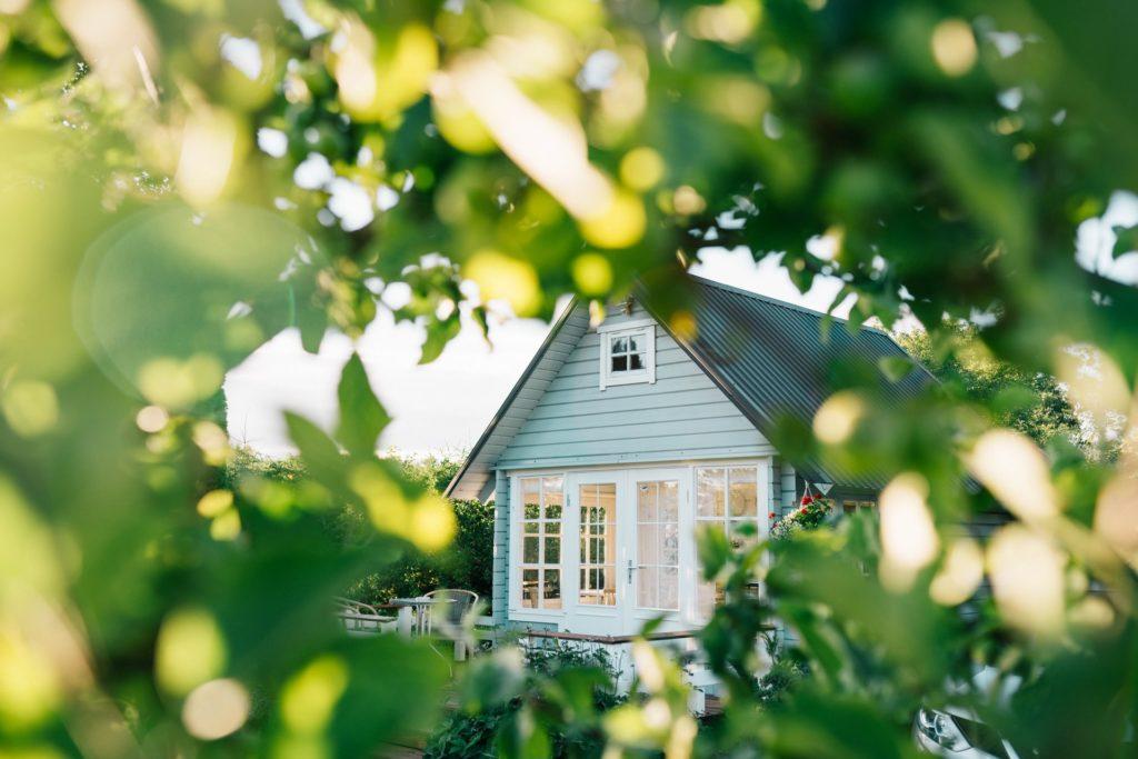 house through leaves